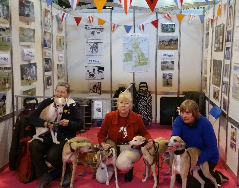 Crufts 2017 Discover Dogs - The Whippet