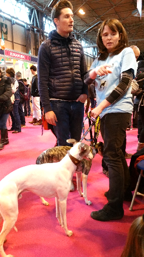 Crufts 2017 Discover Dogs image