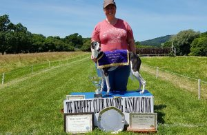 WCRA Annual Trophies - VC Stevie 'O' Challenge Trophy Veteran (Dogs)